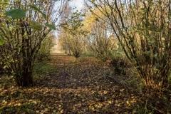 Lovell-Quinta-Arboretum-c-John-Harradine-13