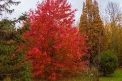 Lovell-Quinta-Arboretum-c-John-Harradine-6