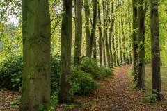 Lovell-Quinta-Arboretum-c-John-Harradine-9
