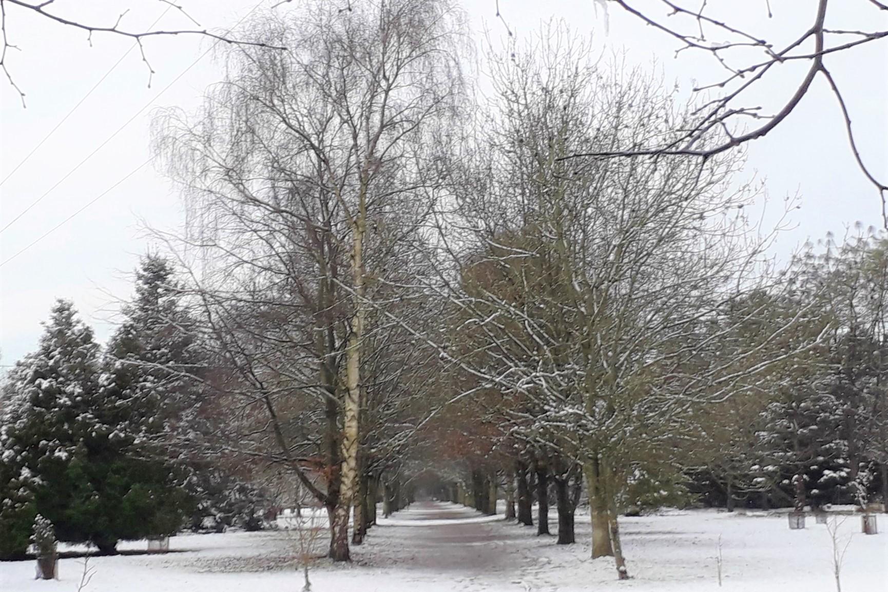 great-avenue-winter