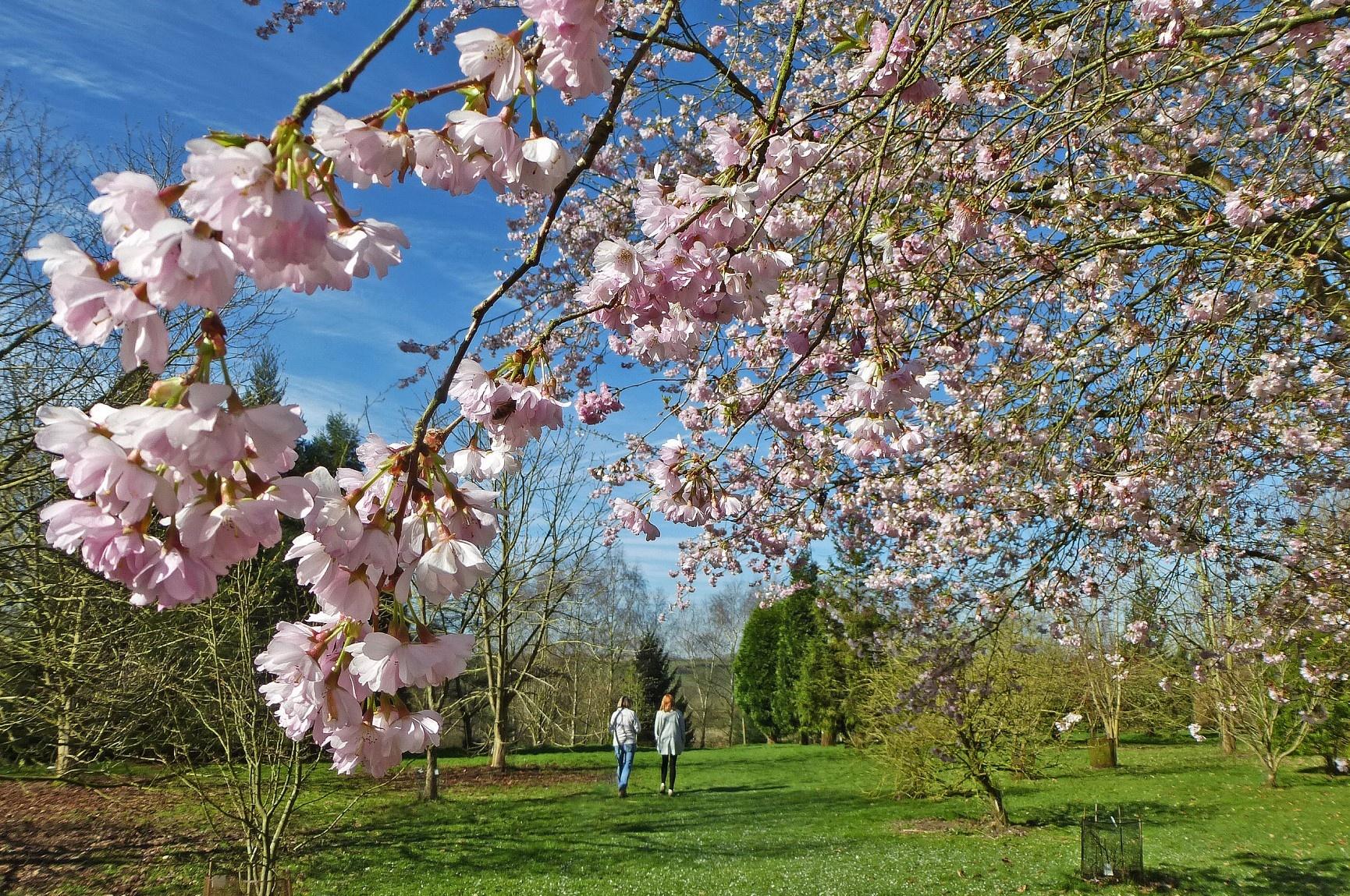 lovell-quinta-arboretum-seasonal-gallery-4
