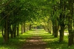 lovell-quinta-arboretum-seasonal-gallery-6