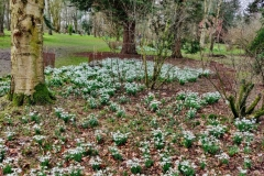 Snowdrops in February (c) Peter Brierley